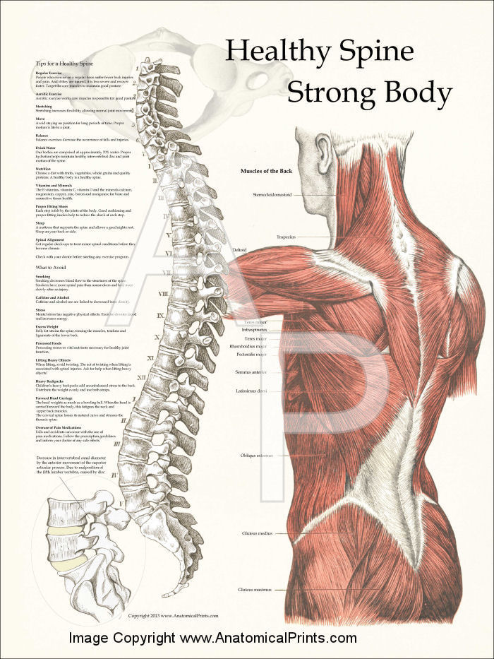 Healthy Spine Strong Body Poster