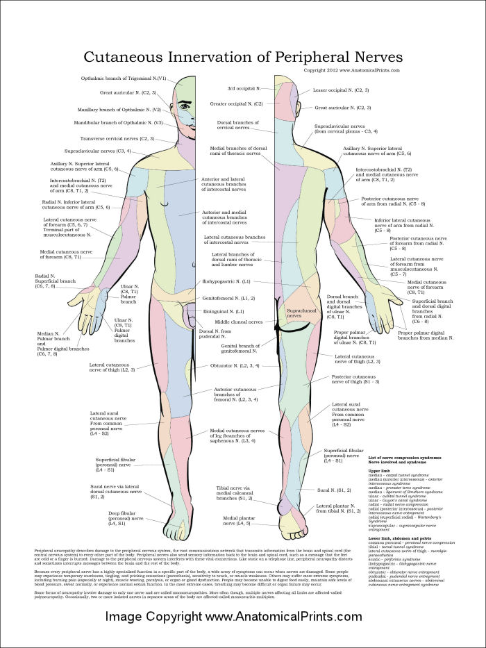 Peripheral Nerves Poster